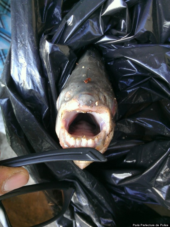 Pacu, Paris Prefecture de Police from the Huffington Post