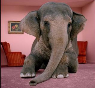un éléphant dans la salle….