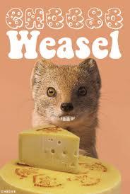 cheese-weasel.jpg