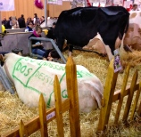 salon-l'agriculture-paris-beef-cuts3.jpg