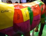 salon-l'agriculture-paris-beef-cuts2.jpg