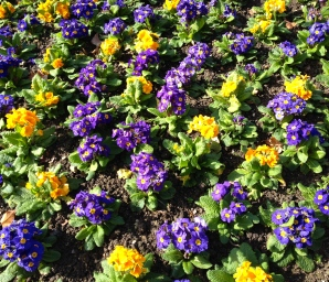 annuals-flowers-champ-de-mars.jpg