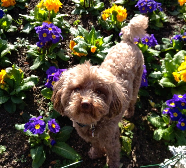 Taz-in-Paris-spring-flowers.jpg