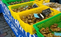 oysters_bordeaux.jpg