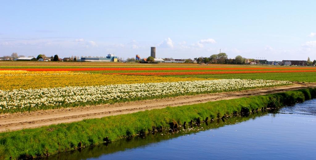 keukenhof_tulips6.jpg