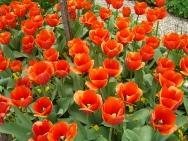giverny_flowers5.jpg