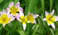 giverny_flowers6.jpg