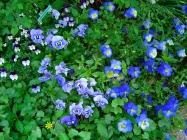 giverny_flowers4.jpg