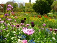 giverny_flowers3.jpg