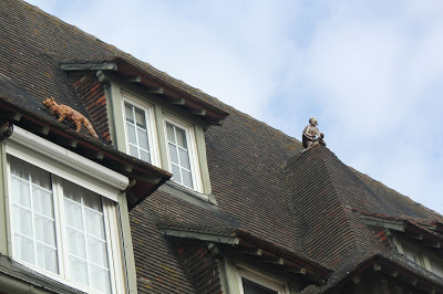 deauville_cats_rooftops.jpg
