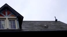 deauville_cats_rooftops4.jpg