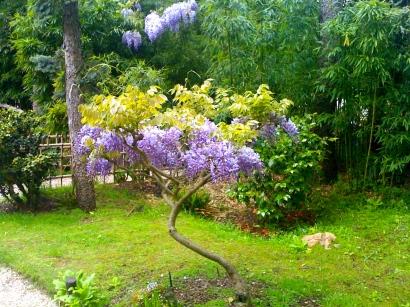 Jardins-Albert-kahn-2.jpg