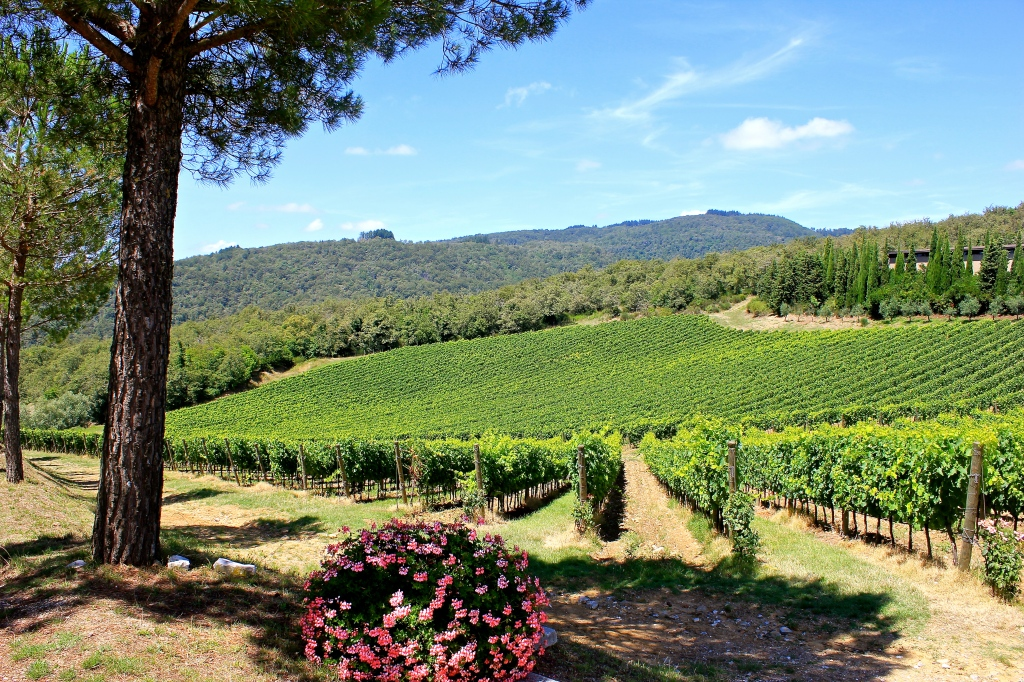 vineyard_tuscany.jpg